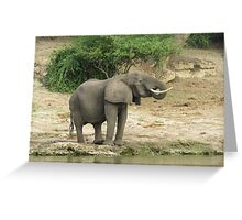 Elephant in the african savannah Greeting Card