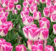 Dutch Tulips part 3 Sticker