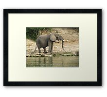 Elephant in the african savannah Framed Print