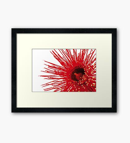"Corymbia ficifolia ""Wildfire"" Framed Print"