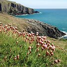 Cliff top Flowers by gm8ty