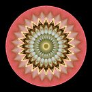 Budding Mandala by Michael Matthews