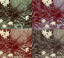 Vintage Rain Lilies by peacesoftuesday