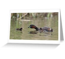 Adult Little Grebe (Tachybaptus ruficollis) feeding young out on open water. Greeting Card