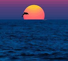 Dolphin by Clark Manor