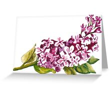 flower _Lilac Greeting Card