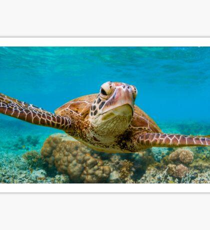 Surfing Turtle Sticker