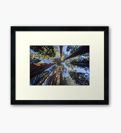 Surrounding Monster Trees - Nature Photography Framed Print