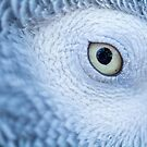 Parakeet Eye by Shaun Colin Bell