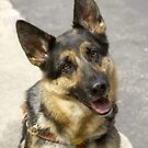 Pasha, The Seeing Eye Dog by Kenneth Hoffman