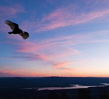 Final Flight at Day's End by Bonnie T.  Barry