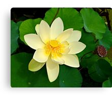 The Lotus Blossom Canvas Print