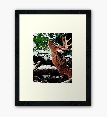 Taste O'wintergreen Framed Print