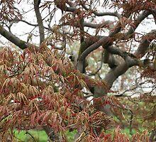 Tree Study 23 by NEKROS