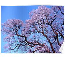 Frosty tree branches against blue sky Poster