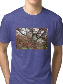 Tree Study 23 Tri-blend T-Shirt