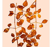 fall golden leaves Photographic Print