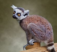 Little Lemur by Krys Bailey