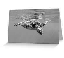 Black and White Turtle Greeting Card