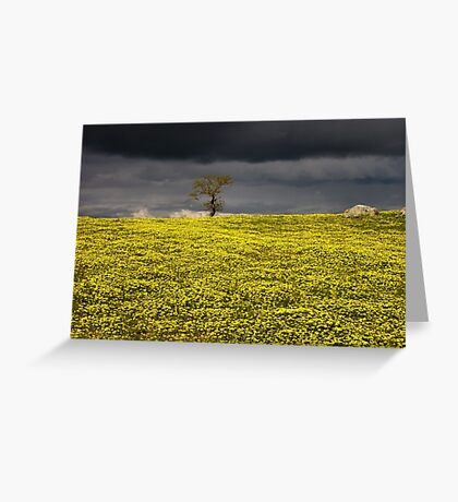 In a sea of capeweed Greeting Card