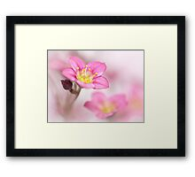 Still sweet as candy.... Framed Print