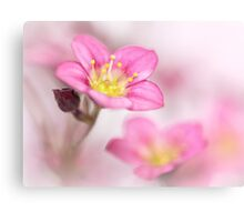 Still sweet as candy.... Canvas Print