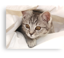 hello kitten Canvas Print