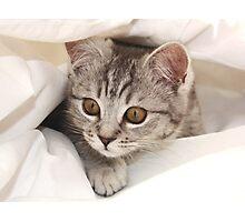 hello kitten Photographic Print