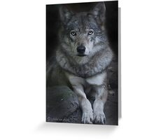 Canis Lupus...AKA Wolf  Greeting Card