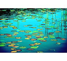 Waterlilies, reeds and reflections Photographic Print