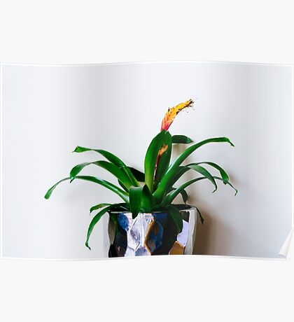 House plant with flower Poster