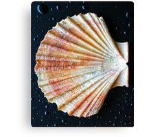 Shell - iPad case by Silvia Ganora Canvas Print