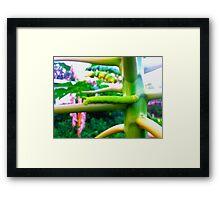 Green Papaya Caterpillar Framed Print