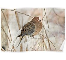 Mourning Dove - Sing No Sad Song for Me #2 Poster