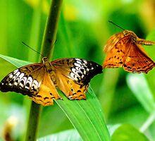 Butterflies by Skyangel