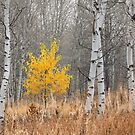Fall Tree with Aspens by Kathleen  Bowman