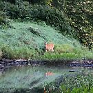 Doe And Her Reflection by Kelly Chiara