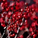 50 Shades of Red by Poete100