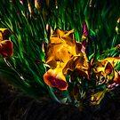 Sun Dodgers by Steve Walser