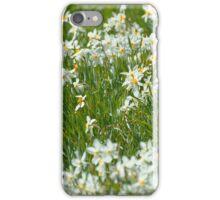 Daffodils - Berkshire Botanical Gardens, Stockbridge, MA iPhone Case/Skin
