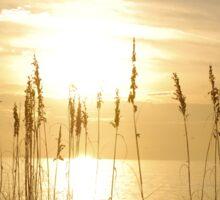 Sunset through sea oats 2 Sticker