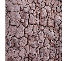 Dry Cracked Mud by Tim McGuire