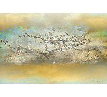 The birdy tree ... Photographic Print