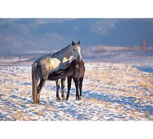 Horse foal suckling from mare in in a snowy meadow Photographic Print
