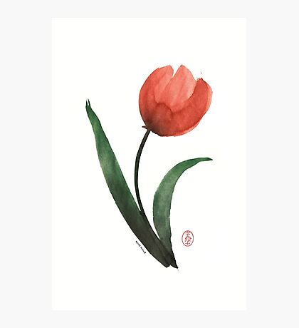 Tulipan Photographic Print