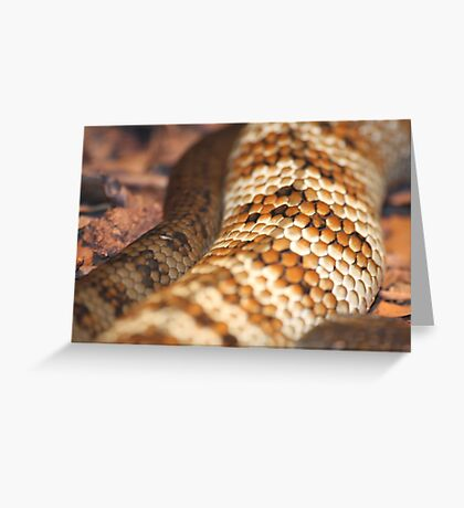 Snake scales Greeting Card