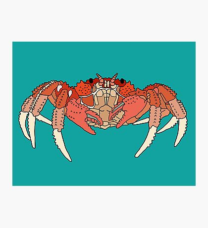 Cool Looking Crab Photographic Print