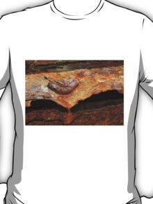 Ship's Anchor, A Study In Decay  T-Shirt