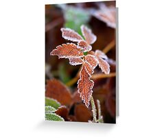 Christmas in the Woods Greeting Card