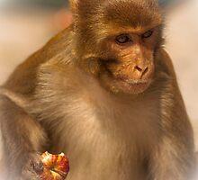 Don't touch MY apple by Richard Shakenovsky